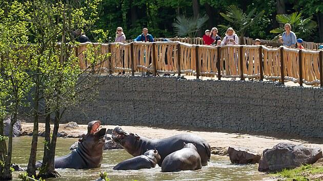 Návštěvníci safari parku mají hrochy v jezeře jako na dlani.