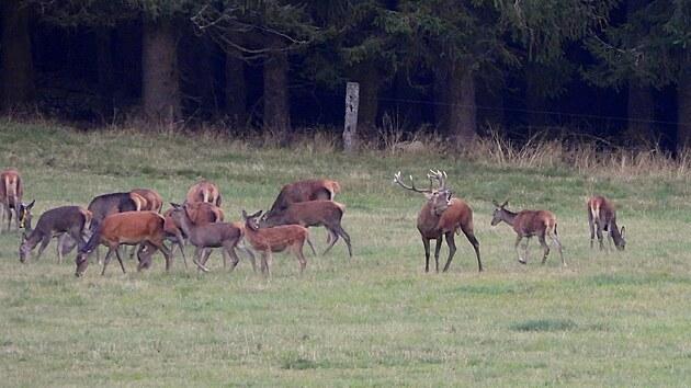 S podzimem začíná největší svátek myslivců, kterım bezesporu je jelení říje.