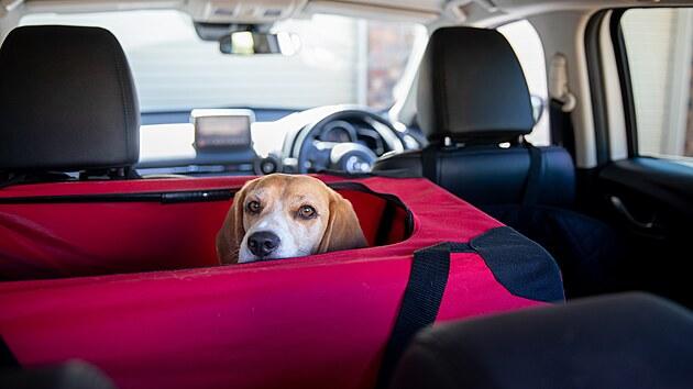 Určitě nelze doporučit cestování se zvířaty volně se pohybujícími po vozidle. Existuje celá řada vhodnıch přepravek, mezi nimiž jistě najdete takovou, která bude vyhovovat vám i vašemu psovi (či kočce).