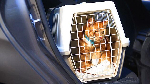 Box se zvířetem v autě jednoznačně zabezpečte proti pohybu, ideálně bezpečnostními pásy.