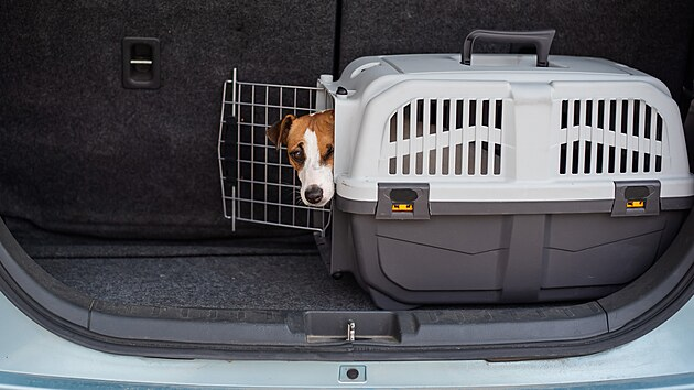Ideální je, pokud psa naučíte cestovat v úložném prostoru automobilu v jeho vlastním přepravním boxu. Jakmile si na to zvykne, bude mít při každé cestě své pohodlí, navíc se nebudete muset obávat o jeho bezpečnost. Pokud vás čeká delší cesta, nechte ho samozřejmě každé dvě tři hodinky proběhnout a nabídněte mu vodu.