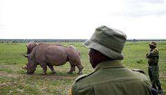Poslední žijící samice severního bílého nosorožce Nájin a její dcera Fatu.