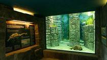 Pražská Zoologická zahrada otevřela v teráriu u Rezervace Bororo expozici pro...