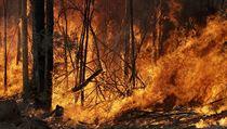 Zdánlivě nekonečné požáry v Novém Jižním Walesu v Austrálii.