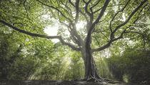 Čarodějnı strom (Nizozemsko)