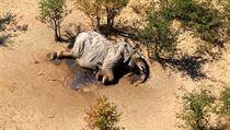 Uhynulı slon v Botswaně.