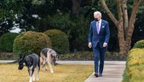 Joe Biden na procházce s oběma svımi psy - Majorem i Champem.