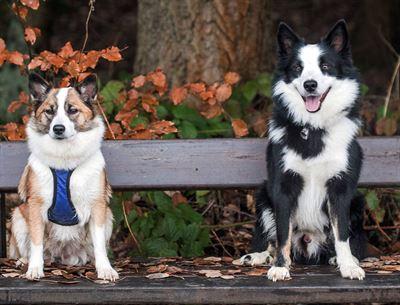 Islandští psi, foto Anja Herken