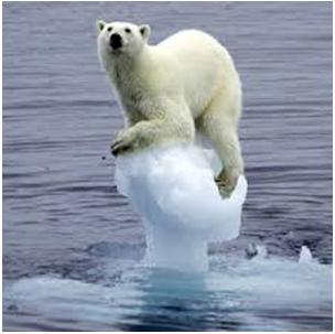 medvěd na kře