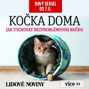 Kočka doma
