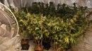 Marihuana měla posloužit k zaplacení hypotéky na dům. Pěstitel teď přijde jak o...