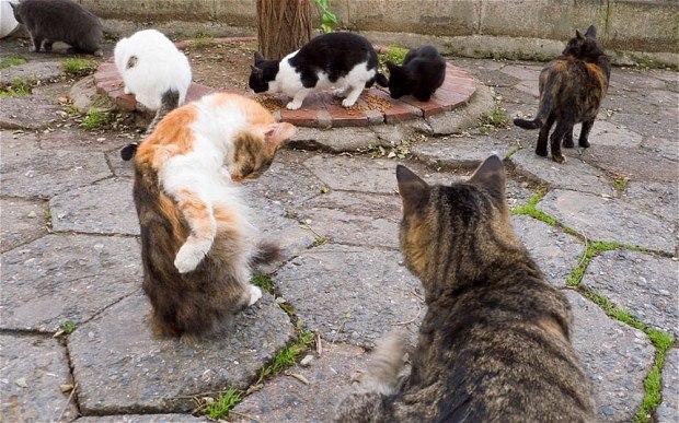 Velká kočička se spermiem