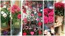 Expres testuje růže na Valentýna.