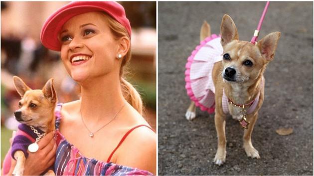 75c71f8292e Fanoušci Pravé blondýnky spolu s Reese Witherspoon truchlí.