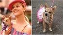 Fanoušci Pravé blondýnky spolu s Reese Witherspoon truchlí. Do psího nebe totiž...