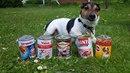 Expres testuje psí konzervy.