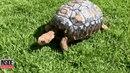 Želvák Freddy má šanci na druhý život.