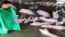 Fotka, která obletěla svět. Zoufalý čínský farmář musí během povodní opustit...