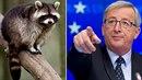 Evropská unie má často dosti nepochopitelné příkazy a zákazy. Posledním...