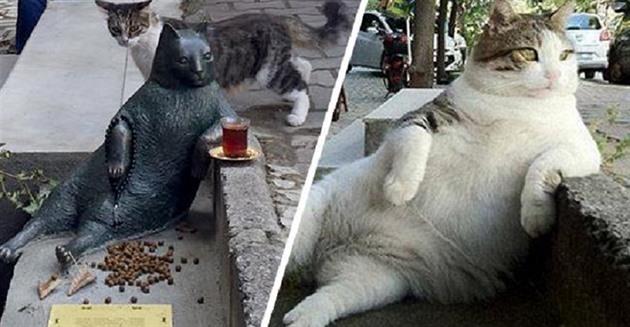 kočička tlusté fotky lesbické hlídání porno