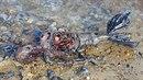 Moře vyplavilo na břeh podivného tvora. Jeho hnijící tělo s lidskou hlavou a...