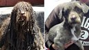 Těžko uvěřit, že na obou fotkách je stejný pes. Toulavý kříženec Čoko se v péči...