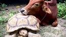 V záchranném středisku pro ohrožená zvířata v Thajsku došlo k nepříliš...