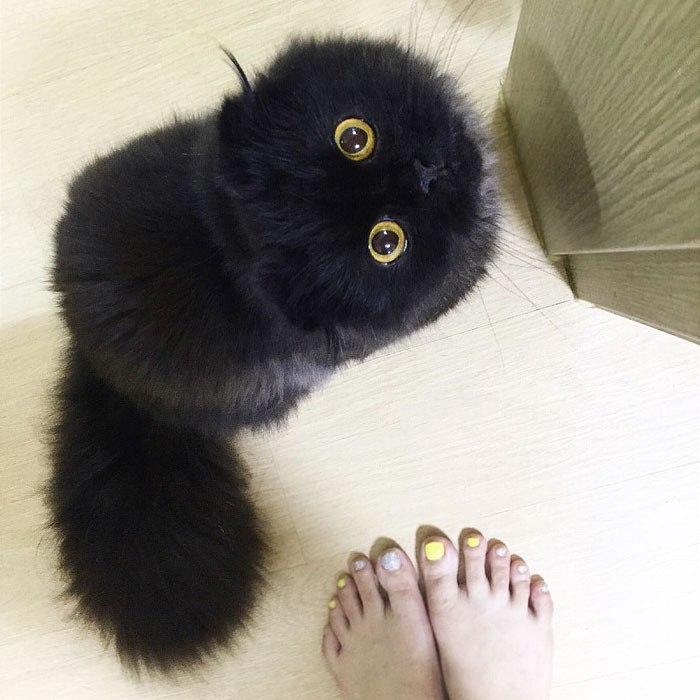tlustá černá kočička šíření velká péro těsné kočička trubice