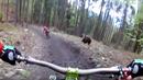 Medvěd pronásledoval cyklisty ve slovenském bike parku!