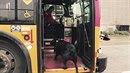 Fenku Eclipse znají na autobusové lince D v Seattlu všichni řidiči.