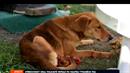 Pes byl nalezen přivázaný za zadní nohy.