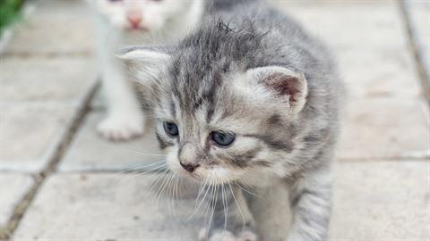 Z nepochopitelných důvodů žena kočku nezískala.