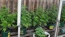 Bruntálští policisté zadrželi gang, který vyráběl a prodával drogy nejen an...
