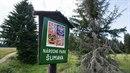 Správa Národního parku Šumava se chystá utratit jelena, který napadl...