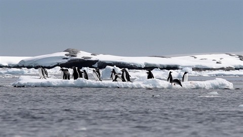 Tučňáky už zebou ťapky.