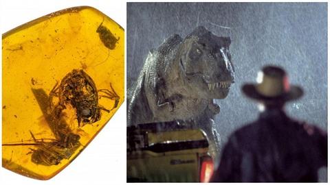 Vědci v Barmě objevili žábu zkamenělou v pryskyřici. Je vůbec možné naklonovat...