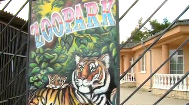 jak velký je tygr lesní kohout velká phat prdel orgie