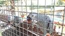 Papoušek žako překvapil majitele jedné zahrádky na Novojičínsku.