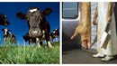 Živočišná výroba je velmi náročná na vstupní suroviny, ničí planetu a do roku...
