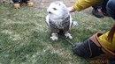 Bohumínští hasiči vysvobozovali sovici sněžnou, která visela na stromě hlavou...