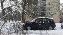 Nalomená větev stromu spadla v Olomouci na auto, které poškodila.