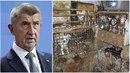 Premiér Andrej Babiš vyhlásil válku majitelům psích množíren. Do začátku...