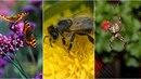 Podobné obrázky už v přírodě dost možná za pár desítek let budeme hledat marně....