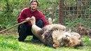 Chovatel na Vsetínsku doplatil na svoji vášeň. Jeden ze lvů ho napadl, střet s...