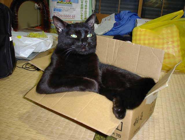 černá kočička uctívání