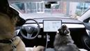 Tesla  má v autech psí mód, aby se vaši mazlíčci neuvařili
