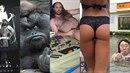 25 nejlepších fotek na netu (dle Google)