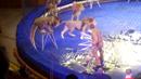 Lev napadl svého krotitele během vystoupení v cirkuse