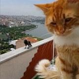 Kočka si povídá s havranem.