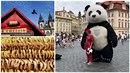 Proč je na Staromáku panda, kdo si zaplatí za slupku od brambor a co tady dělá...